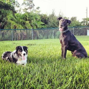 Dog Friendly Parks and Restaurants of Charlotte County